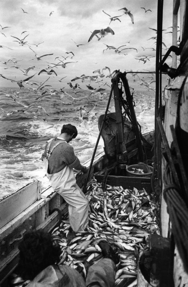 Fishing Industry, 1981 by Nick Hedges