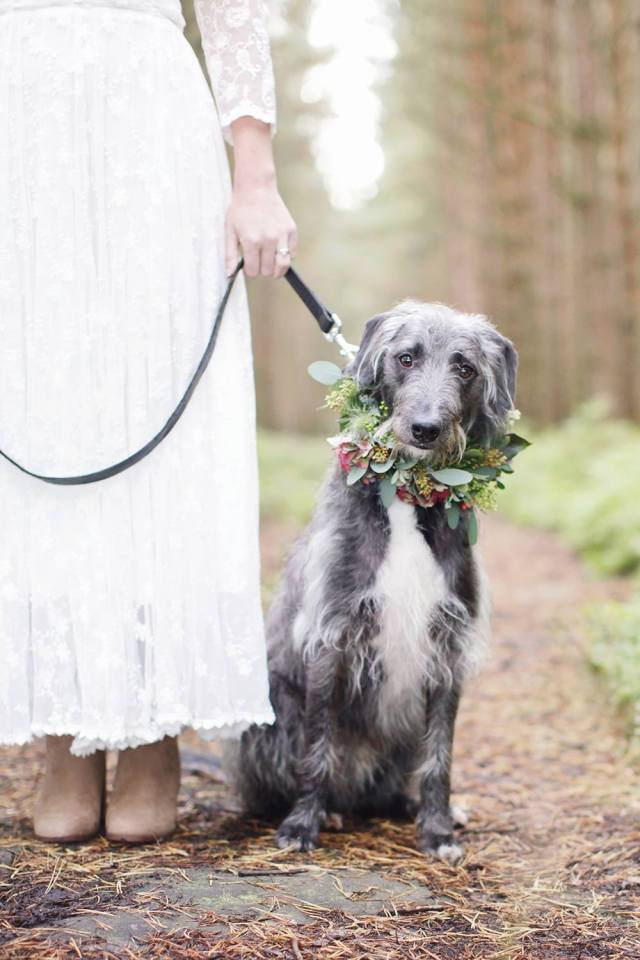 Remy, the reluctant groom. Image courtesy of the brilliant Rachel Rose.